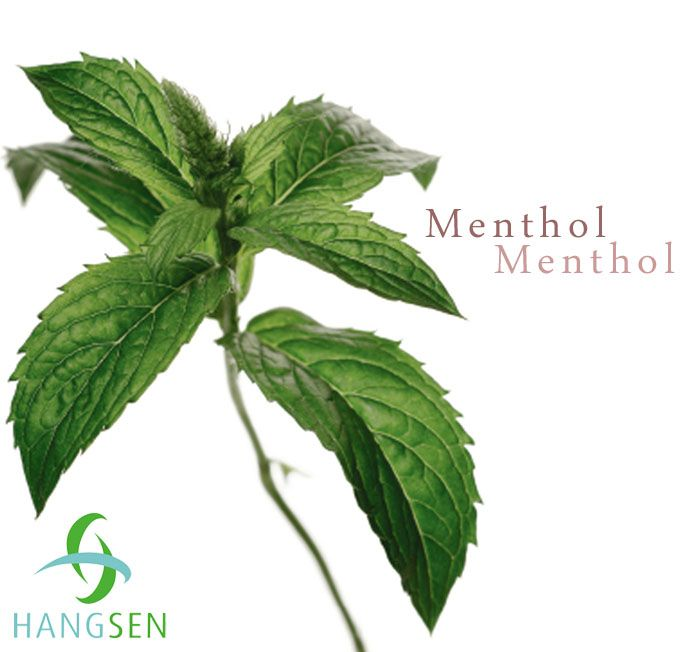 Menthol Liquid PG 10ml, 16mg